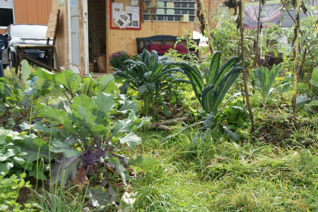 Vegetables in the Nürtingen urban gardening project